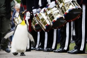 Knighted penguin